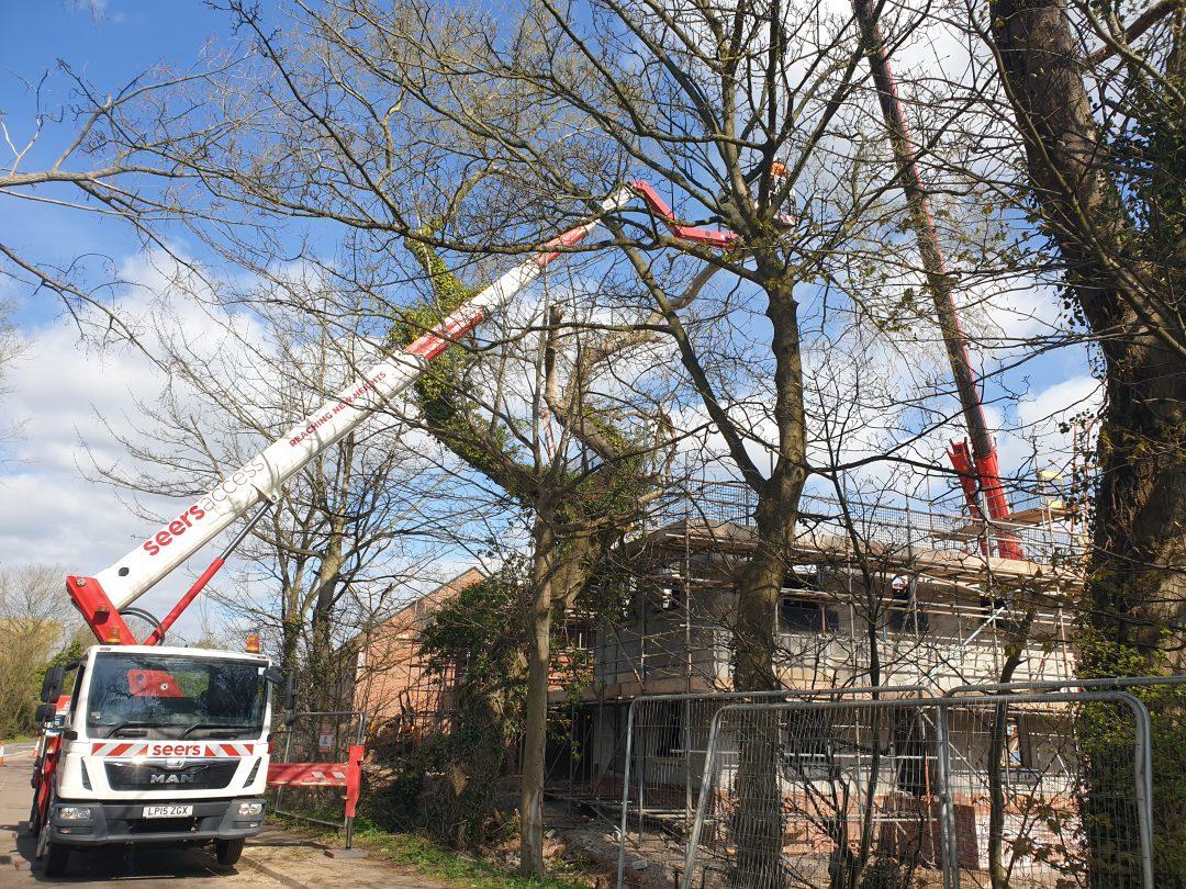 Tree Surgery Cardiff